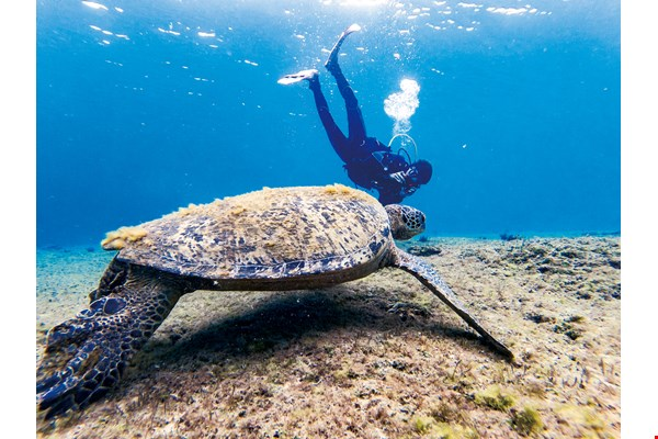 Should you visit Xiao­liu­qiu, diving with the sea turtles is an experience absolutely not to be missed. (photo by Lin Min-hsuan)
