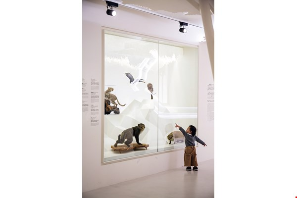 Different strokes for different folks: With specimens posed like works of art, and moving images in place of the traditional text-heavy explanations, both young and old can easily enjoy the displays.