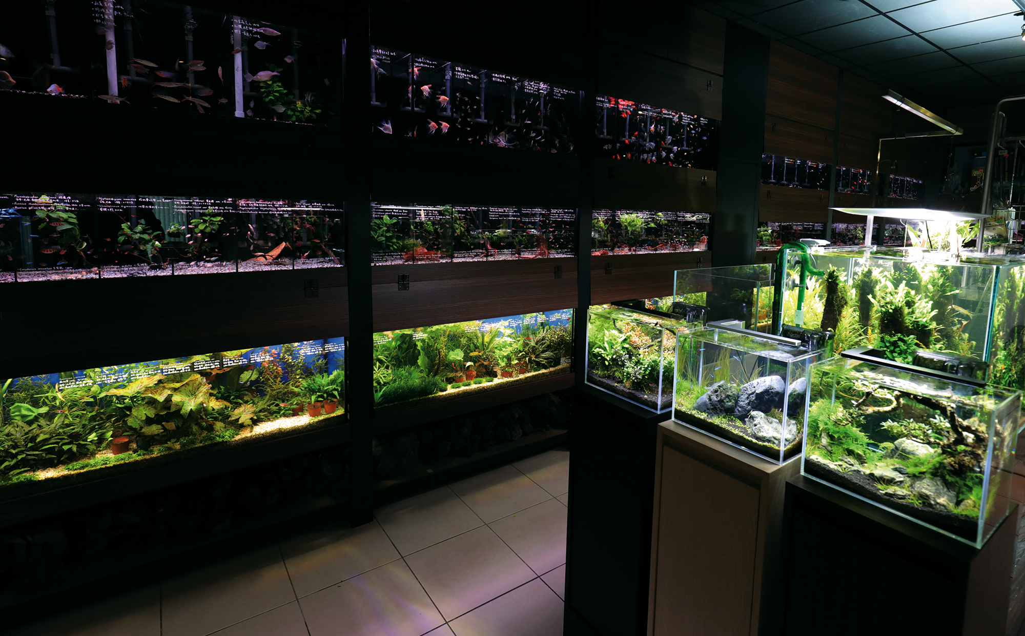 "The cramped nature of urban life plus the increasing diversity of ornamental fish and crustaceans has given rise to the ""nano tank.""  (photo by Jimmy Lin)"