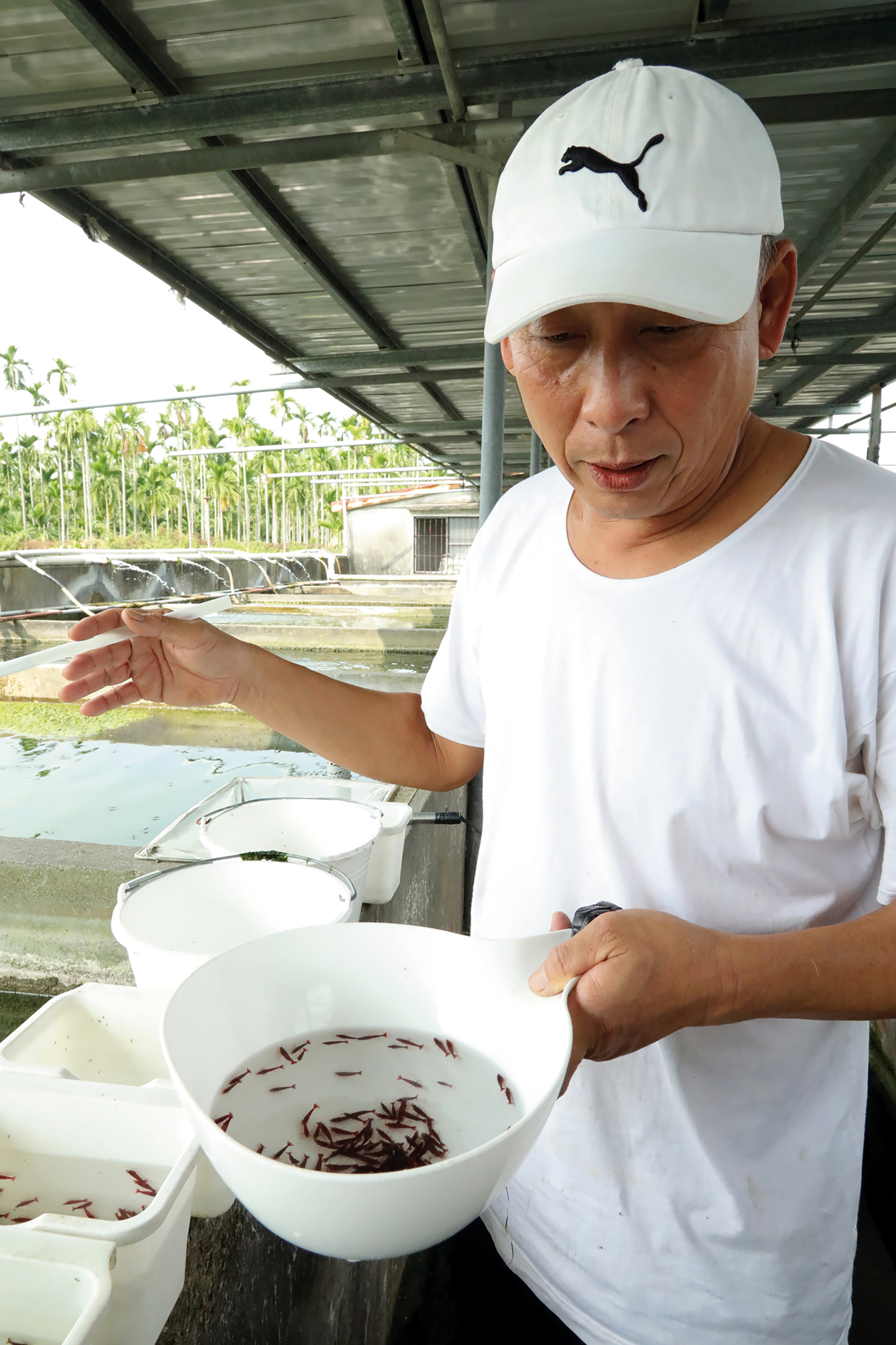 "Although many fish farms produce ornamental shrimps, only Larmax International selects them individually for color and size. After any sick shrimp are screened out, you have high quality shrimp that stand out from competitors. Wang Kuo-chung says proudly: ""We set the prices for five-elements shrimp!"""