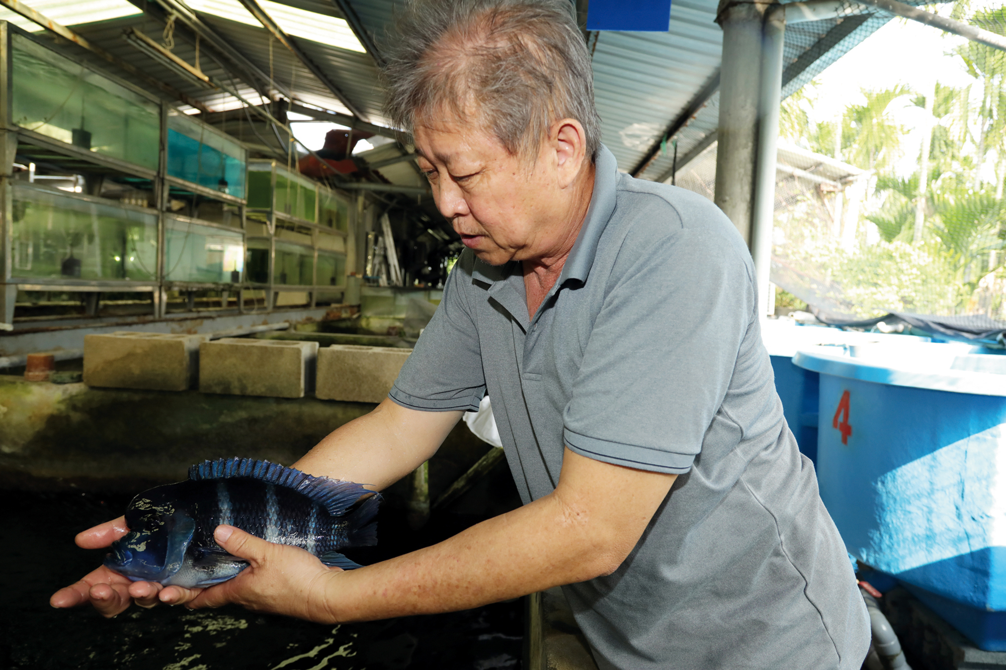 Lee Chi-tai sees a wealth of potential market opportunities. Specialized hobbyists, who do not buy from large wholesalers, provide a niche in which small-scale ornamental fish farms can find a footing.