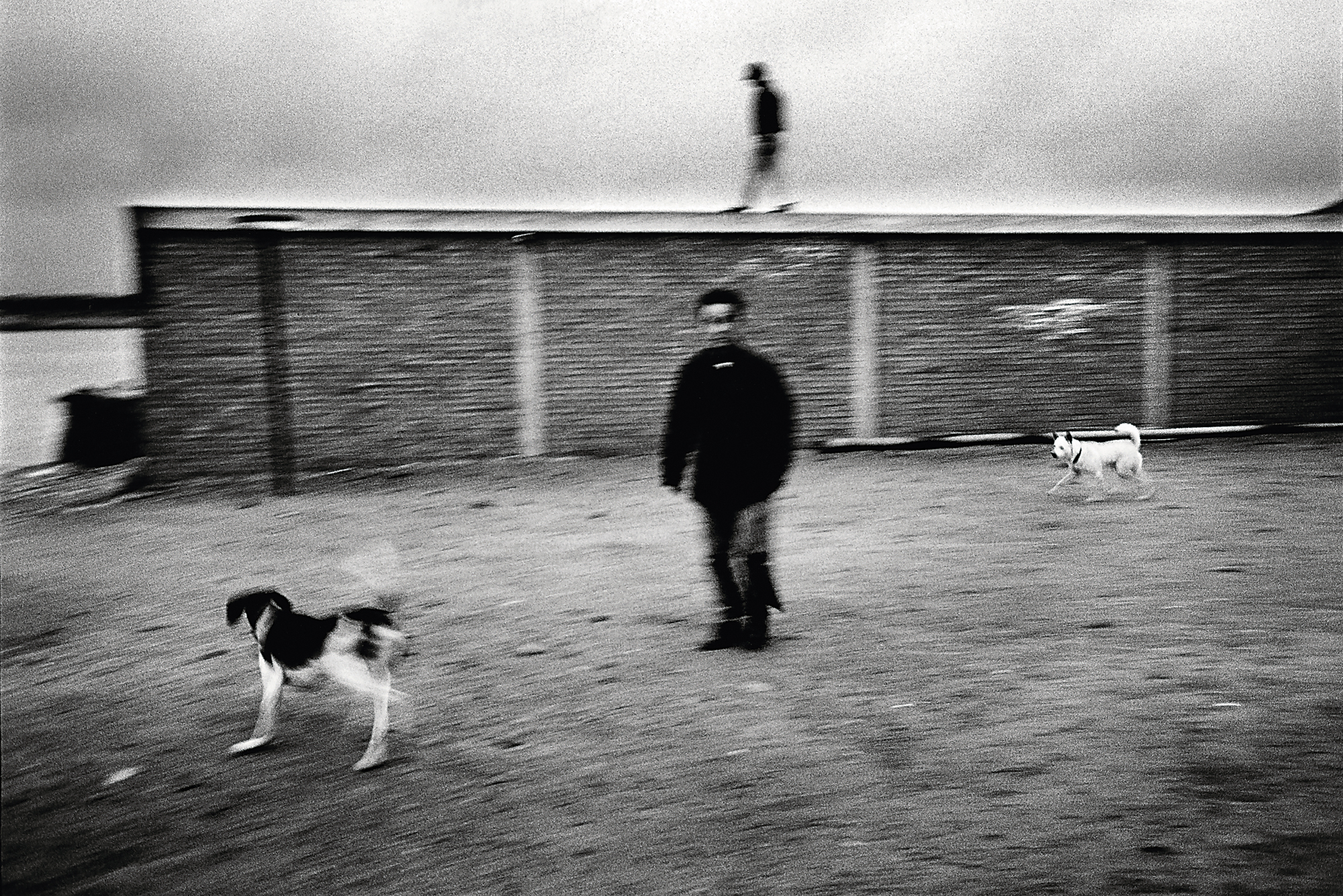 As the two men and the dogs departed, the camera captured them perfectly arranged relative to the wall, creating a great image. (courtesy of Chang Chao-tang)