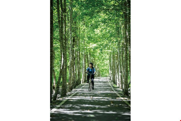 The Danongdafu Forest Park has an extensive network of bicycle trails. Riding in the shade of the trees you feel cool, comfortable, happy and content. (photo by Chuang Kung-ju)