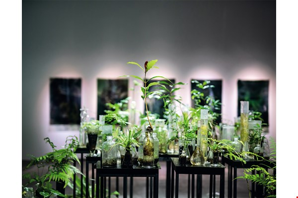 Janet Laurence's artistic touch gives Taiwan's flora a poetic charm. (photo by Lin Min-hsuan)