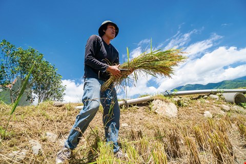 Wei Jui-ting, a child of a farming family who left his rural hometown behind, later returned home and now uses technology and expertise to market his rice around the world. (photo by Lin Min-hsuan)